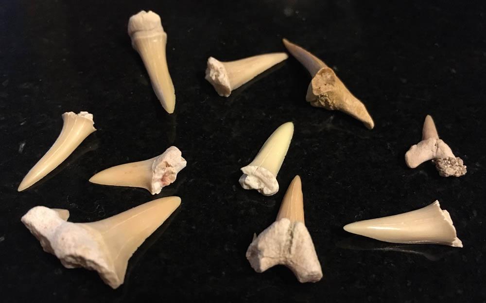 shark teeth on marble