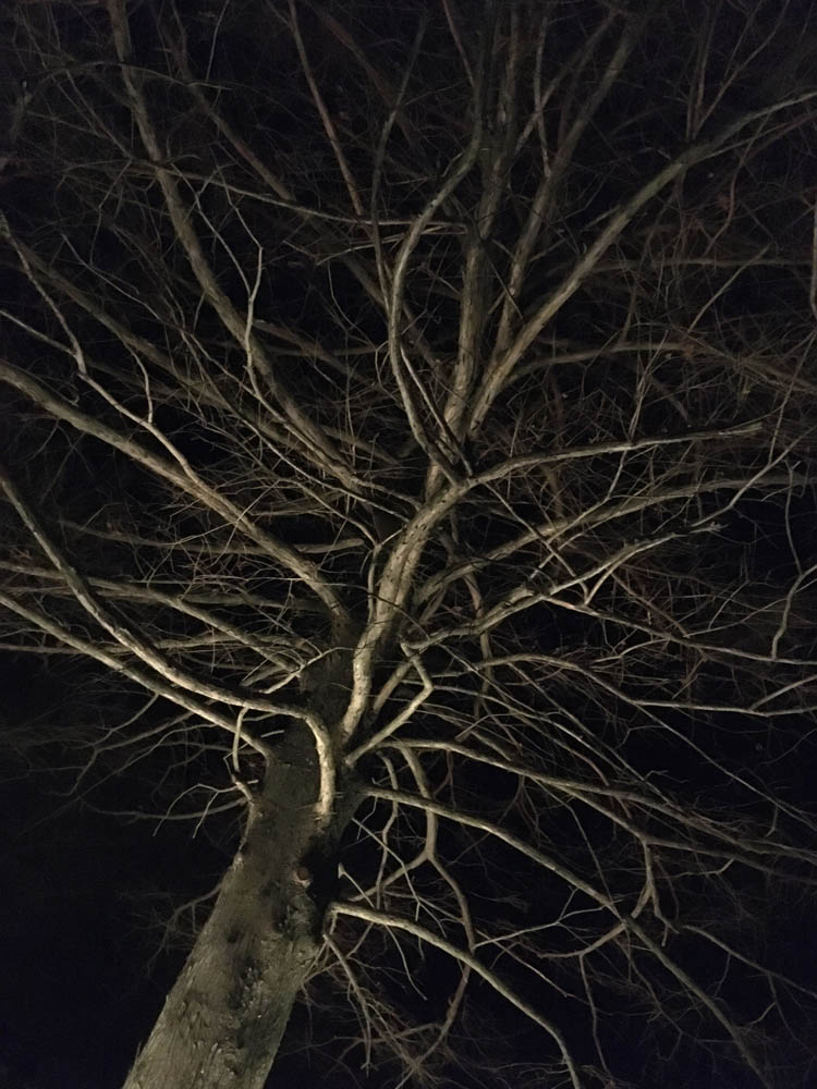 photograph of a barren tree at night in winter, as lit ominously from beneath
